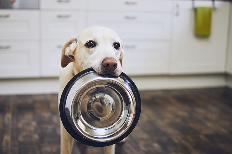 Запрет на ввоз кормов для животных