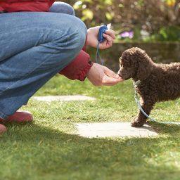 Лакомства для социализации и дрессировки щенка